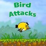 Bird Attacks